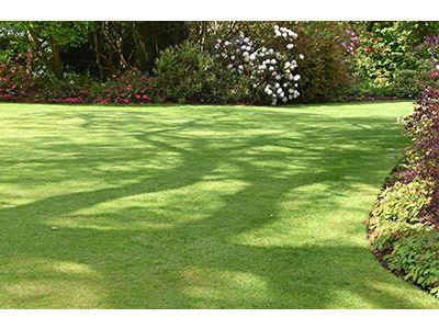 3 weeks to a summer garden