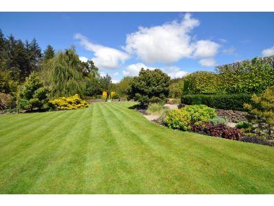 Get a Wimbledon worthy lawn...